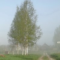 Можно сказать, мероприятие по туману - оптичили. :: Владимир Гилясев