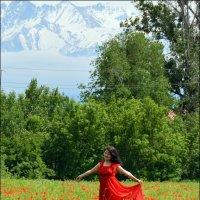 Красные маки. :: Anna Gornostayeva