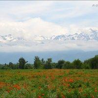 Весна на склонах Заилийского Алатау. :: Anna Gornostayeva