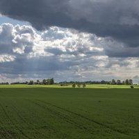 Весенний пейзаж :: shvlad