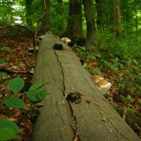 Грибное дерево :: Edward Kod