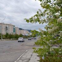 Северобайкальская весна :: Ольга