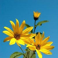 Осенние цветы :: Денис Масленников