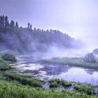 Опушка леса! :: Дмитрий Кошелев