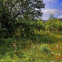 Весенние  травы... :: Валера39 Василевский.
