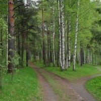 Свежая зелень весны :: Анатолий