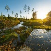 Ural Tree :: Ринат Валитов