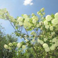 Молодо-зелено :: Геннадий Храмцов