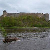 Ивангородская крепость :: Наталья Левина