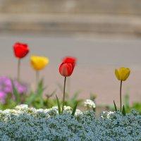 Весна в Обители. :: Геннадий Александрович