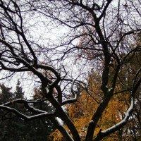 Середина осени - драматичная картина :: Денис Масленников