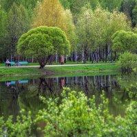 В парке. :: Александр Лейкум