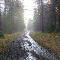 Убегающая вдаль :: vladimir Bormotov