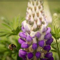Пчёлы и другие паукообразные) :: Андрей Бойко