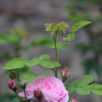 Цветочный хоровод-56. :: Руслан Грицунь