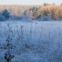 Морозное утро :: Борис Панков