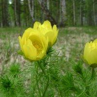 Лесные цветы. :: Анатолий