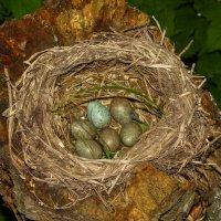 Гнездо :: Денис Матвеев
