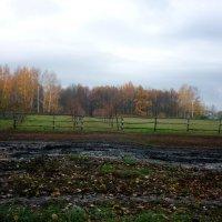 Природа в Тарханах :: Olga Photo