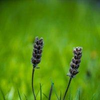 Весна :: Aleksandr Khomenko