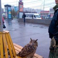 Ждет автобус... :: Валерий Пегушев