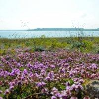Весенний берег :: Ольга Голубева