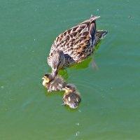Заботливая мамочка! :: Наталья
