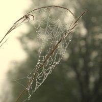 Кокетка-паутинка :: галина северинова