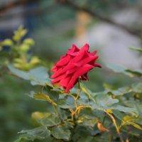 Цветочный хоровод-61. :: Руслан Грицунь