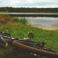 Лесное озеро :: Антон Терещенко