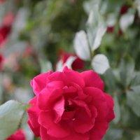 Цветочный хоровод-68. :: Руслан Грицунь