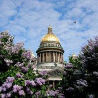 С Днём рождения, Санкт-Петербург! :: Вера Моисеева