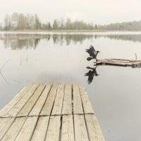 Танцы на воде.. :: Елена Волкова