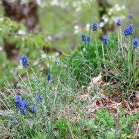Цветы в лесу :: Нина Сигаева