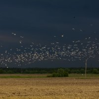 Чайки :: Денис Матвеев