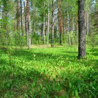 Майский лес :: Милешкин Владимир Алексеевич