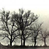 В тумане :: Катерина Чебышева