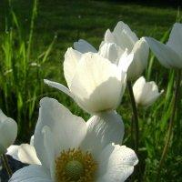 Весенние цветочки. :: Анатолий