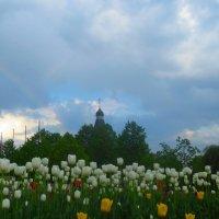 немного радуги к тюльпанам :: Елена