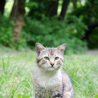 Местные котейки ... :: Іван