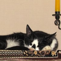 Спящий кот :: Canon PowerShot SX510 HS