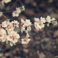 весна :: Дарья Шевцова