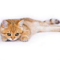 Котёнок :: Ольга Юрина