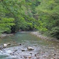 река Хоста в роще :: Алексей Меринов