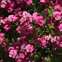 Цветочный хоровод-84. :: Руслан Грицунь