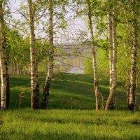 """""""Я в весеннем лесу пил берёзовый сок """" ... :: Мила Бовкун"""