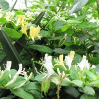 Южные цветы :: Ольга Иргит