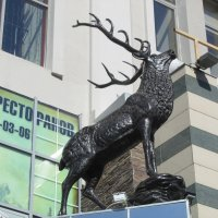 в Казани :: tgtyjdrf