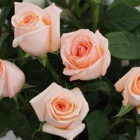 Как хороши, как свежи были розы... :: Сергей Михальченко