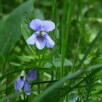 лесные цветы :: Сергей Цветков